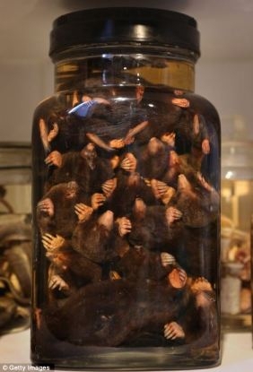 A JAR OF MOLES