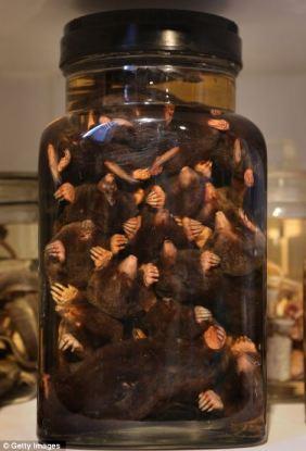 A JAR OF MOLES