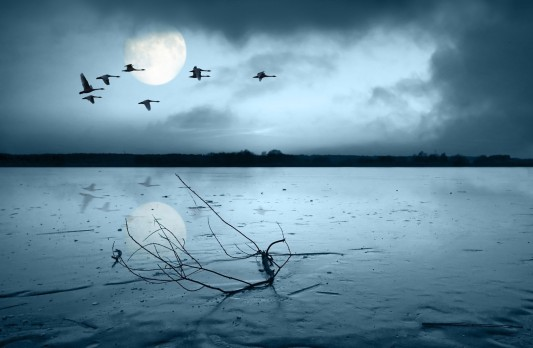 Nighttime Geese Clouds Moonlight Lake Flying Moon Tree 3d Wallpaper